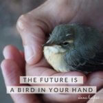 New Year Coming and Your Future is a Bird In Your Hand!
